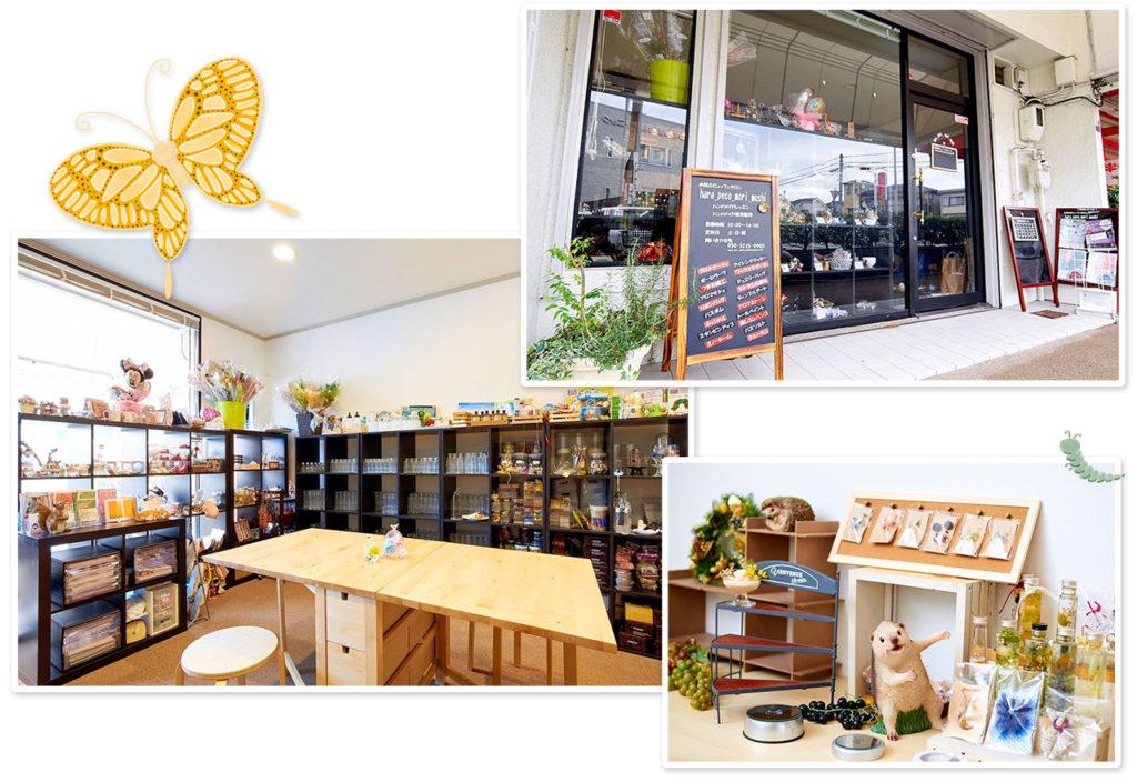 hara_peco_mori_mushi 宝塚市小林の店舗